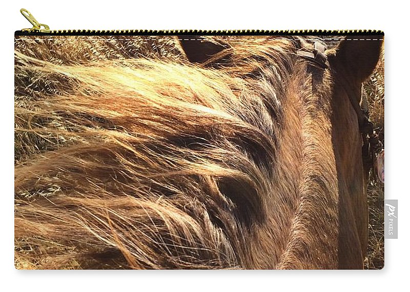 Horses Carry-all Pouch featuring the photograph Changing With The Grass by JoJo Brown