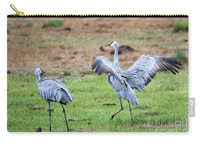 Sandhill Cranes Carry-all Pouch featuring the photograph Check The Moves by Mike Dawson