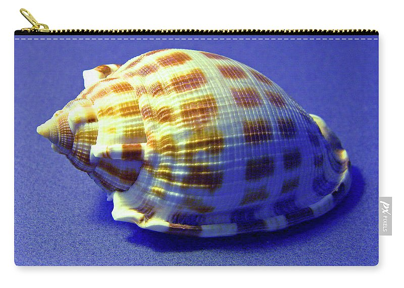 Frank Wilson Carry-all Pouch featuring the photograph Checkered Helmet Seashell by Frank Wilson