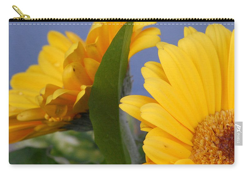 Gerbera Daisy Carry-all Pouch featuring the photograph Cheerful Gerbera Daisies by Amy Fose
