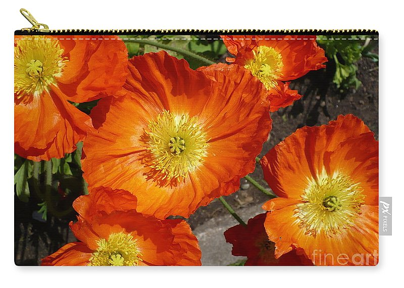 Card Carry-all Pouch featuring the photograph Cheerful Orange Flowers by Carol Groenen
