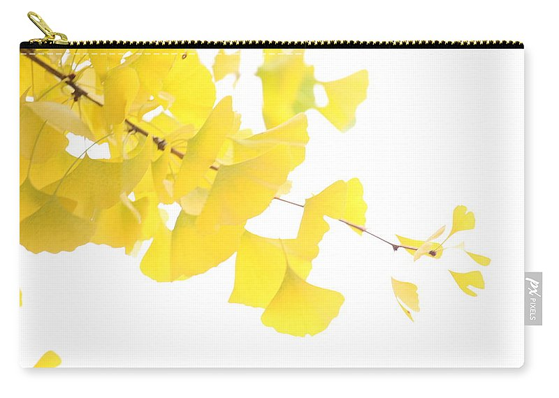 Yellow Ginkgo Tree Fall Autumn Carry-all Pouch featuring the photograph Cheery Ginkgo by Colby Foster