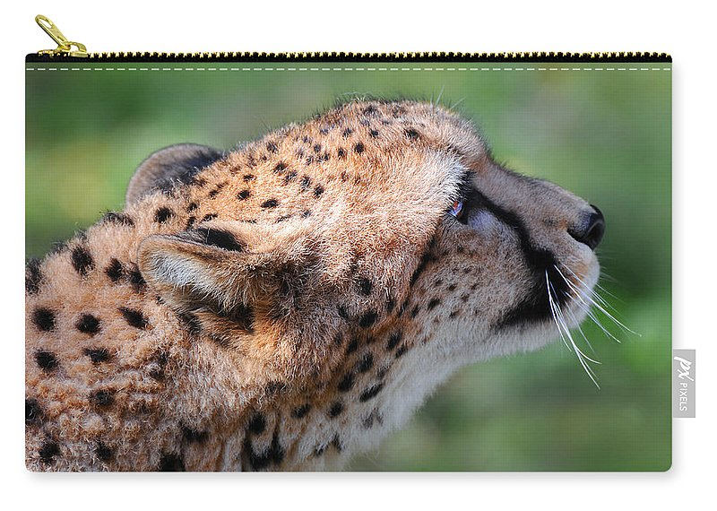 Stephanie Butler Carry-all Pouch featuring the photograph Cheetah by Stephie Butler
