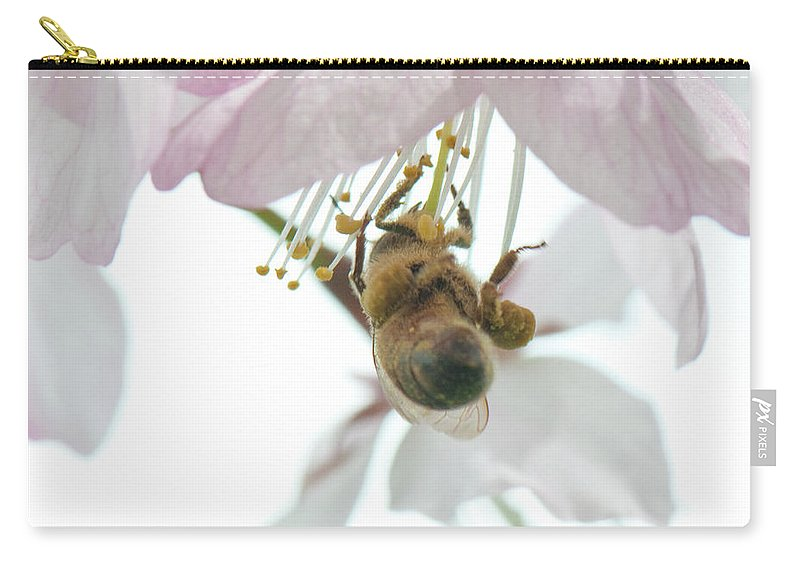 Photography Carry-all Pouch featuring the photograph Cherry Blossom With Bee by Steven Natanson