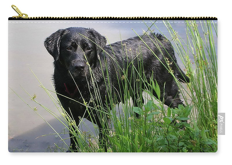 Animals Carry-all Pouch featuring the photograph Chicago 0121 by Guy Whiteley