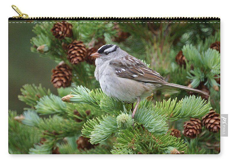 Chickadee Carry-all Pouch featuring the photograph Chickadee by Heather Coen