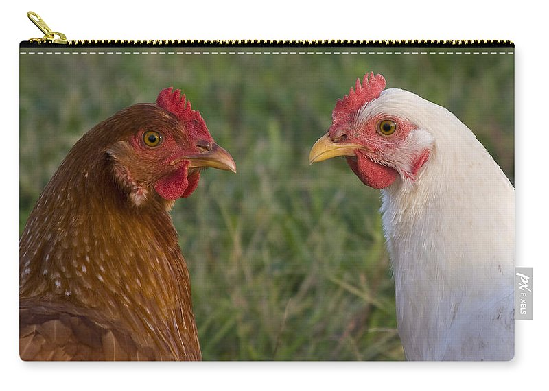 Chicken Hen Farm Rural Curious Bird Country Carry-all Pouch featuring the photograph Chickens by Andrei Shliakhau