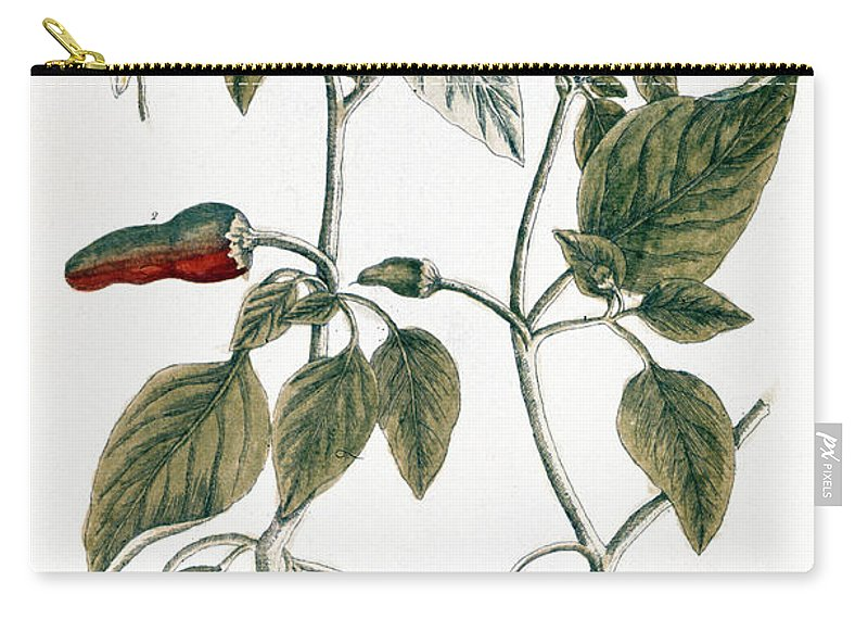 1730s Carry-all Pouch featuring the photograph Chili Pepper, 1735 by Granger