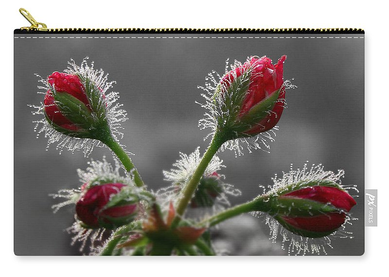 Geranium Carry-all Pouch featuring the photograph Christmas In May by Lori Deiter
