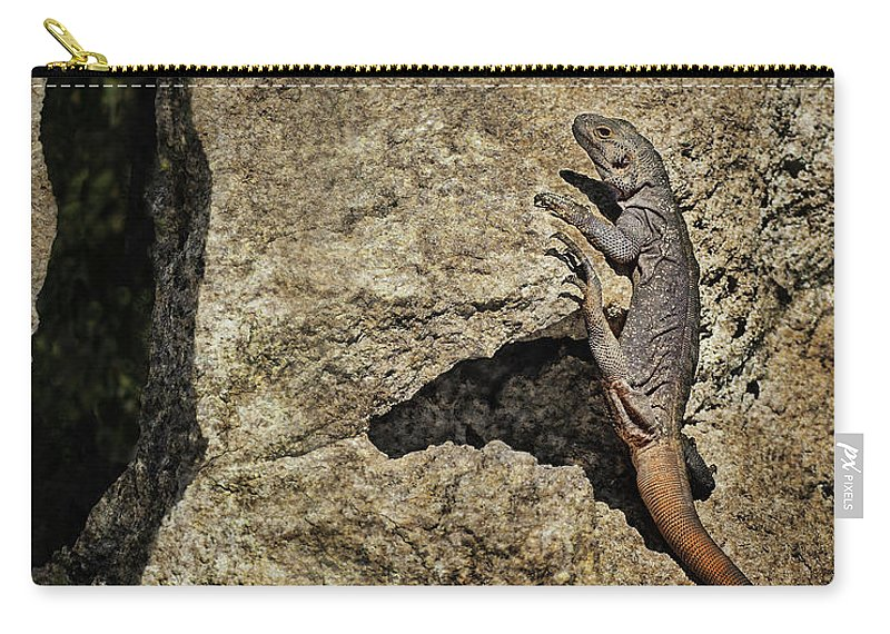 Lizard Carry-all Pouch featuring the photograph Chuckwalla - Crevice by Nikolyn McDonald