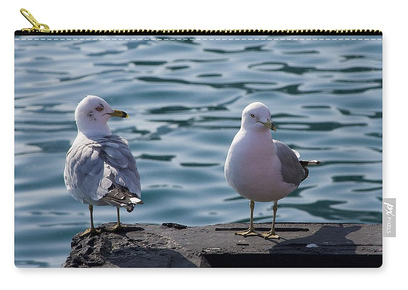 Gull Gulls Seagulls Lake Michigan Chicago Windy City Bird Couple Wave Water Pier Feather Carry-all Pouch featuring the photograph City Gulls by Andrei Shliakhau