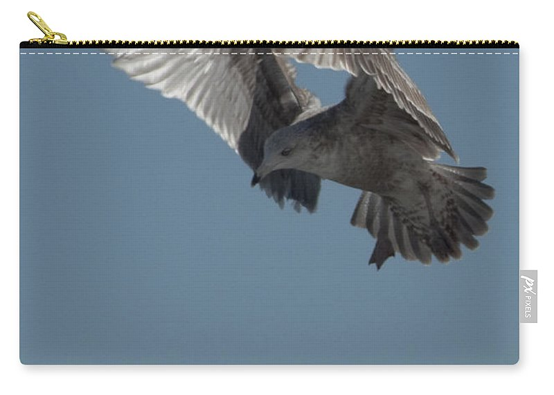 Seagull Carry-all Pouch featuring the photograph Clams For Dinner 3 by Steven Natanson