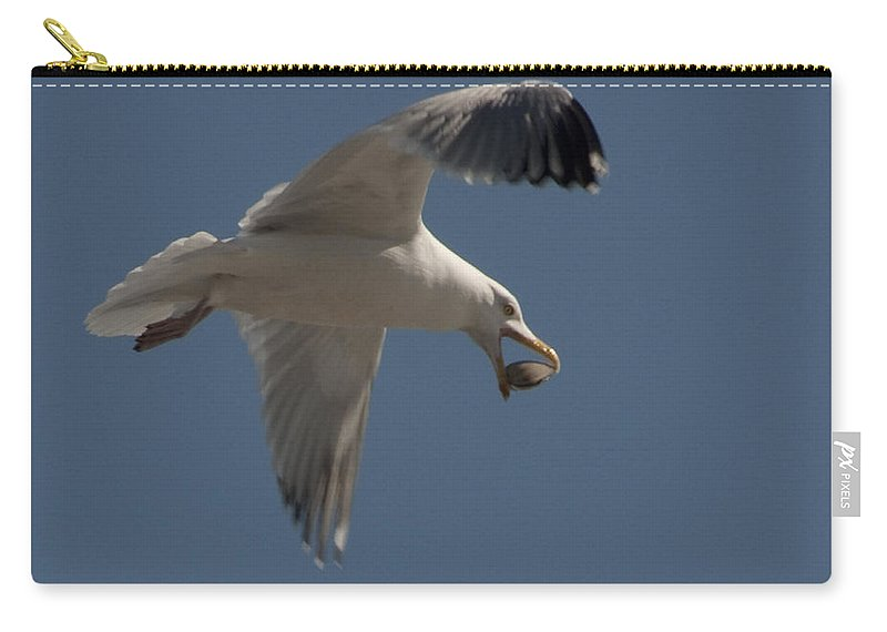 Seagull Carry-all Pouch featuring the photograph Clams For Dinner by Steven Natanson