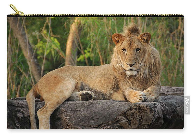 Lion Carry-all Pouch featuring the photograph Classic Young Male by Steven Sparks