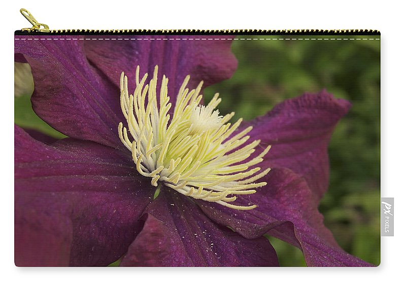 Flower Carry-all Pouch featuring the photograph Clematis 4000 by Michael Peychich