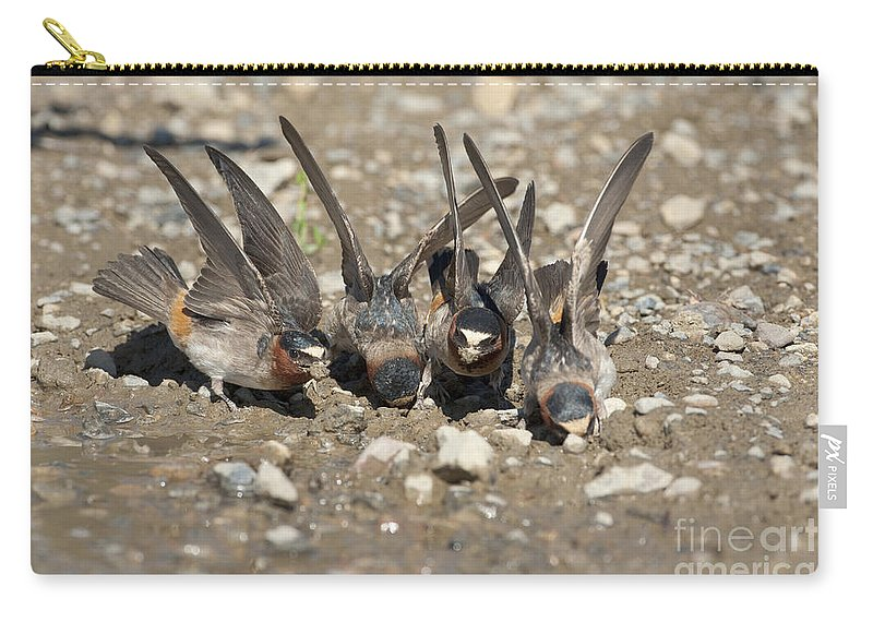 Cliff Swallows Carry-all Pouch featuring the photograph Cliff Swallows Gather Mud by Marie Read