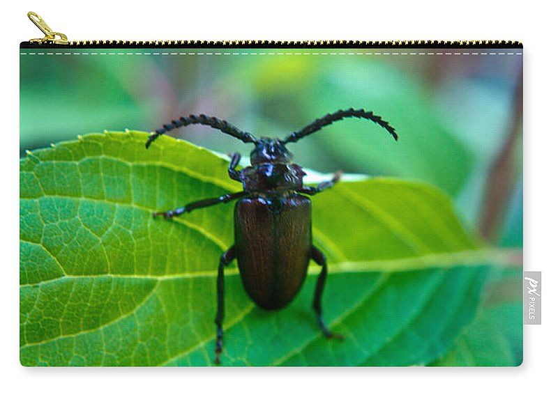 Coleoptera Carry-all Pouch featuring the photograph Climbing Beetle by Douglas Barnett