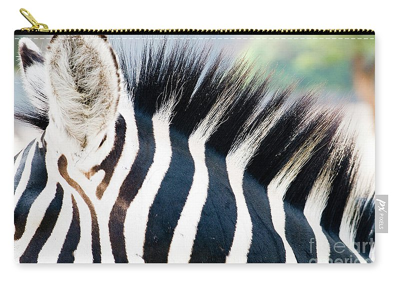 Zebra Carry-all Pouch featuring the photograph Close Up Of A Zebra by Sharon Zilberczveig