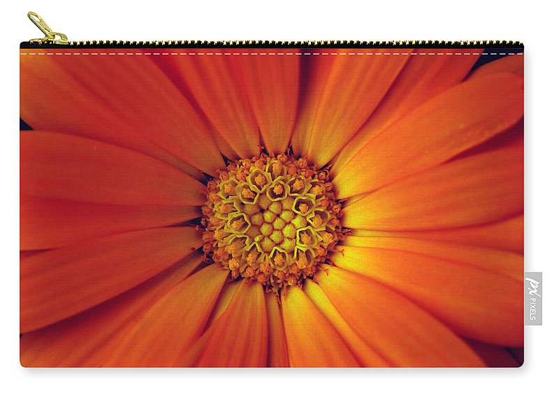 Plant Carry-all Pouch featuring the photograph Close Up Of An Orange Daisy by Ralph A Ledergerber-Photography