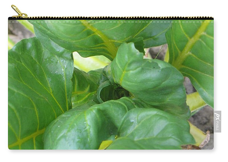 Green Carry-all Pouch featuring the photograph Close Up With Chard by Pam Davis