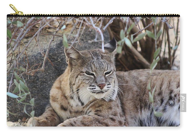 Bobcat Carry-all Pouch featuring the photograph Closeup Of Bobcat by Colleen Cornelius