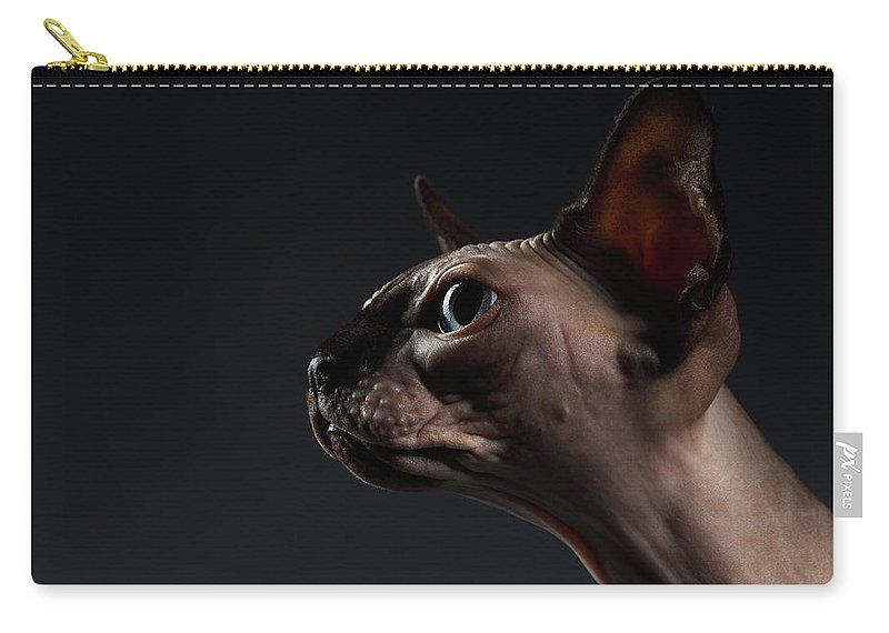 Portrait Carry-all Pouch featuring the photograph Closeup Portrait Of Sphynx Cat In Profile View On Black by Sergey Taran