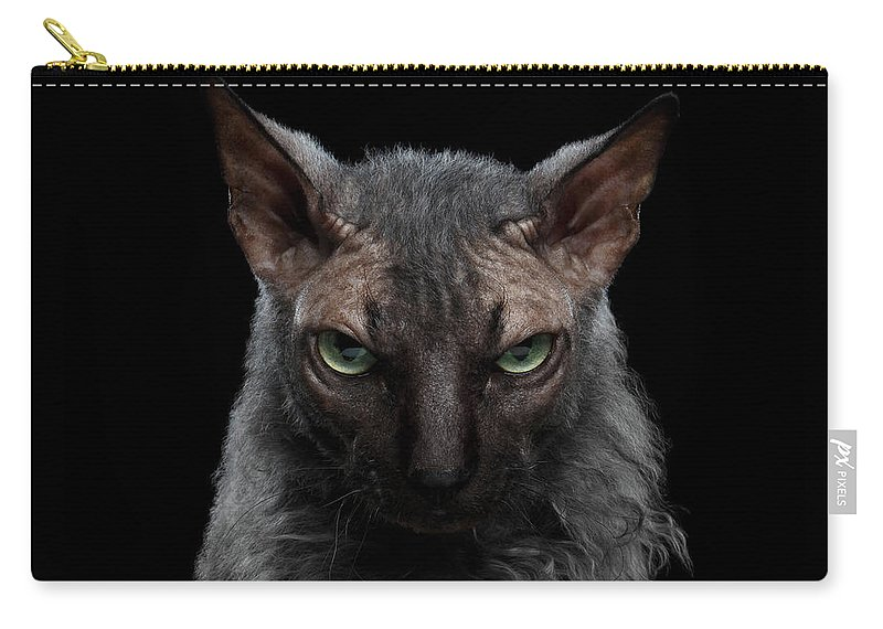 Werewolf Carry-all Pouch featuring the photograph Closeup Werewolf Sphynx Cat Angry Looking In Camera Isolated Black by Sergey Taran