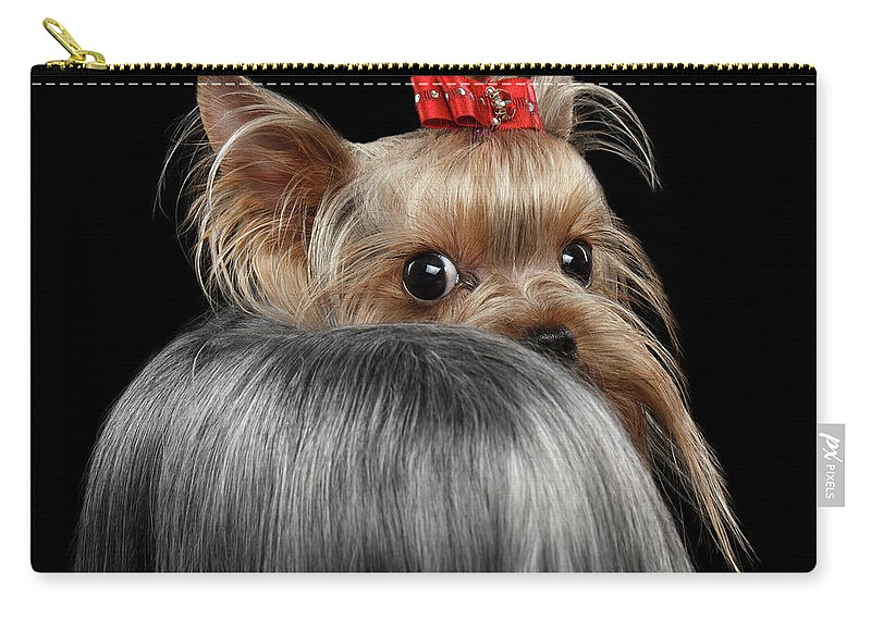 Closeup Carry-all Pouch featuring the photograph Closeup Yorkshire Terrier Dog, Long Groomed Hair Pity Looking Back by Sergey Taran