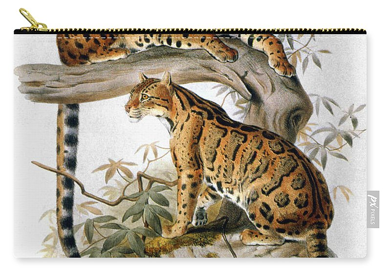 1883 Carry-all Pouch featuring the photograph Clouded Leopard, 1883 by Granger