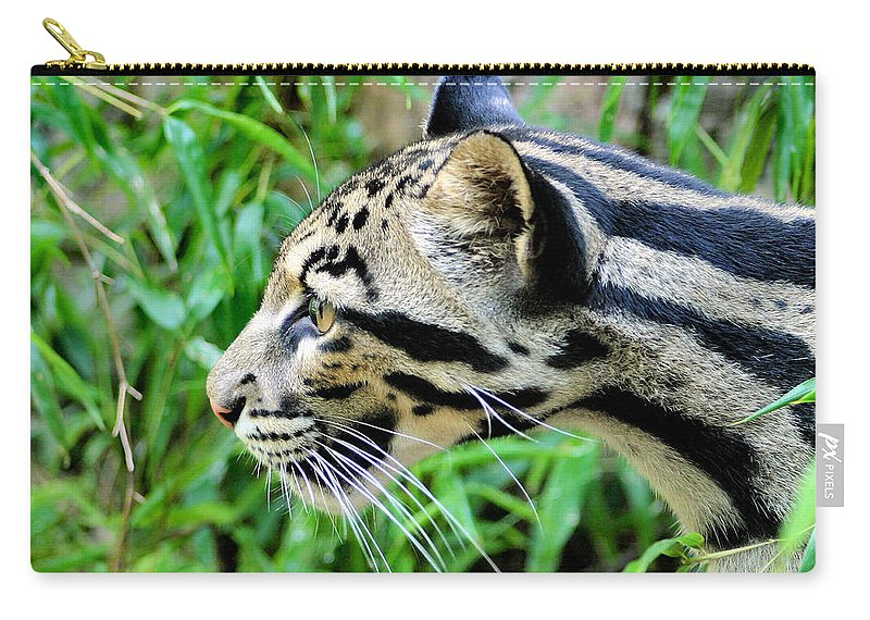 Clouded Leopard Carry-all Pouch featuring the photograph Clouded Leopard In The Grass by Kristin Elmquist