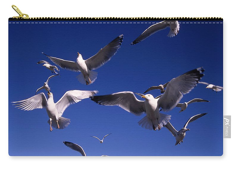 Seagull Birds Flight Carry-all Pouch featuring the photograph Cnrg0302 by Henry Butz