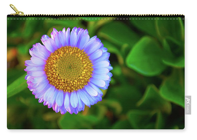 Aster Carry-all Pouch featuring the photograph Coastal Aster by Christine Dorfer