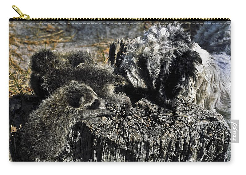 Cockapoo Dog Carry-all Pouch featuring the photograph Cockapoo Tends Racoons by Sally Weigand