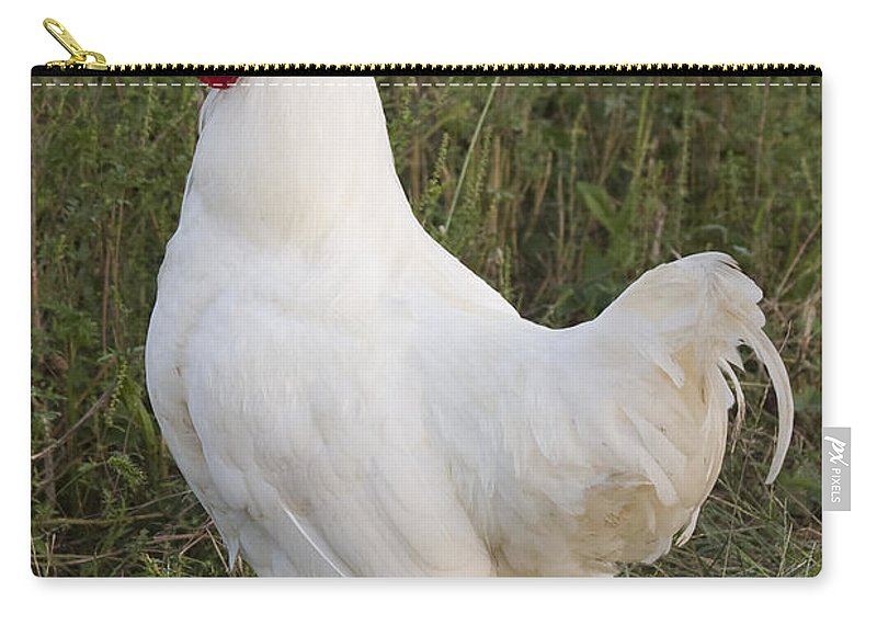 Rooster Chicken Bird White Farm Rural Red Grass Carry-all Pouch featuring the photograph Cocky by Andrei Shliakhau