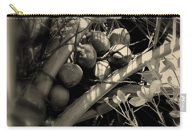 Coconuts Carry-all Pouch featuring the photograph Coconuts by Susanne Van Hulst