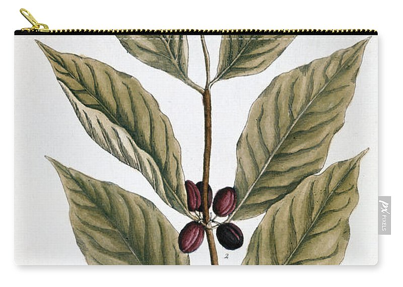 1730s Carry-all Pouch featuring the photograph Coffee Plant, 1735 by Granger