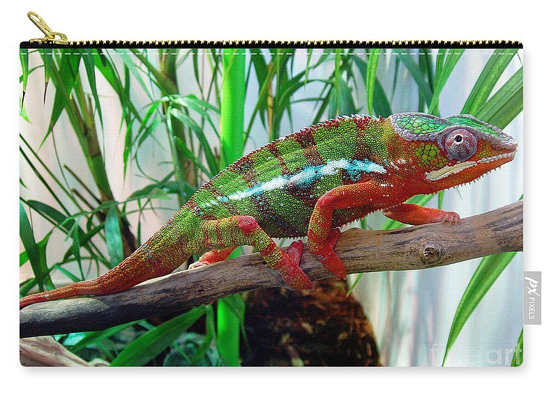Chameleon Carry-all Pouch featuring the photograph Colorful Chameleon by Nancy Mueller