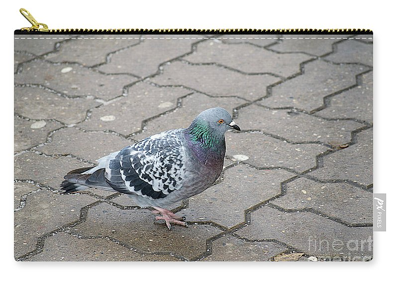 Dove Carry-all Pouch featuring the photograph Colorful Dove by Elvira Ladocki