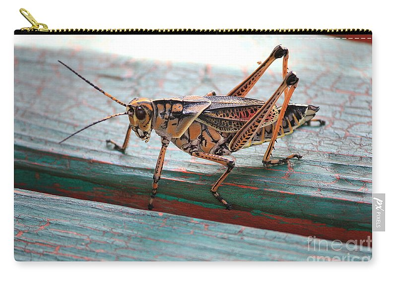 Insects Carry-all Pouch featuring the photograph Colorful Grasshopper by Carol Groenen