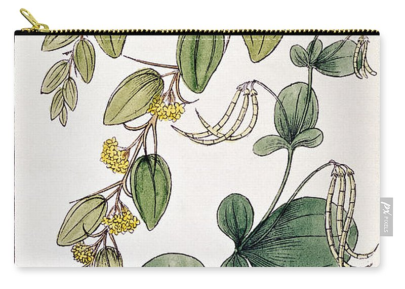 1855 Carry-all Pouch featuring the photograph Colosseum: Flower by Granger