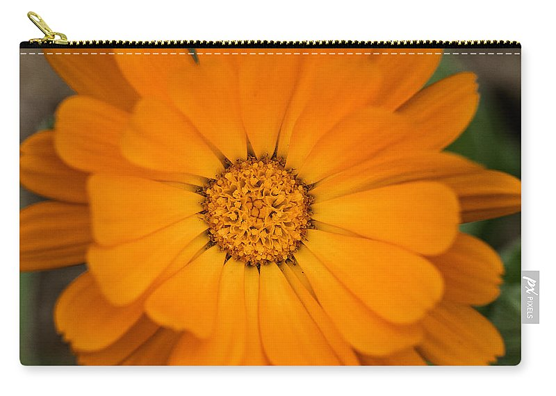 Orange Marigold Carry-all Pouch featuring the photograph Colourful Orange Signet Marigold by Brothers Beerens