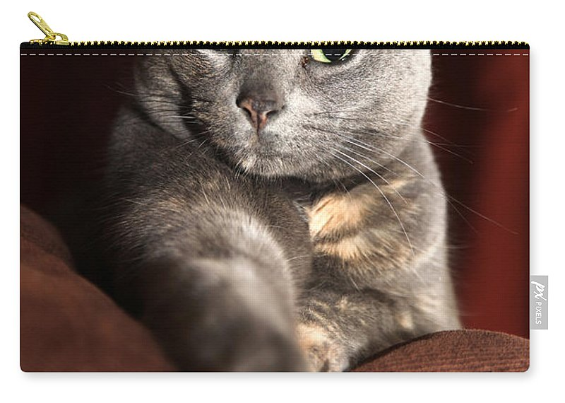 Kitty Carry-all Pouch featuring the photograph Come Here by Amanda Barcon
