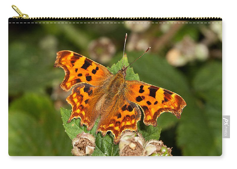 Comma Carry-all Pouch featuring the photograph Comma Butterfly by Bob Kemp