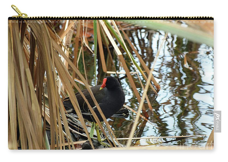 Common Gallinule Carry-all Pouch featuring the photograph Common Gallinule by William Tasker