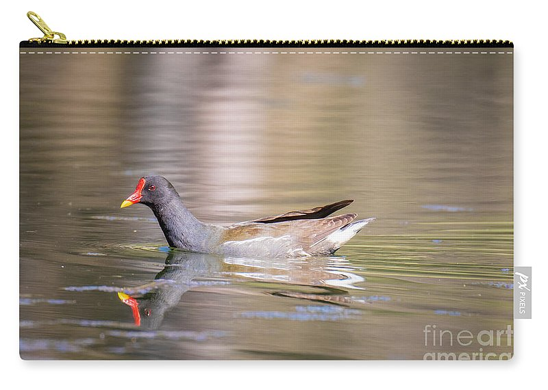 Animalia Carry-all Pouch featuring the photograph Common Moorhen by Jivko Nakev