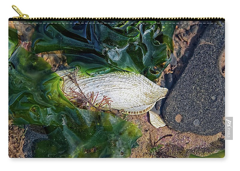 Piddock Carry-all Pouch featuring the photograph Common Piddock - Pholas Dactylus by Susie Peek
