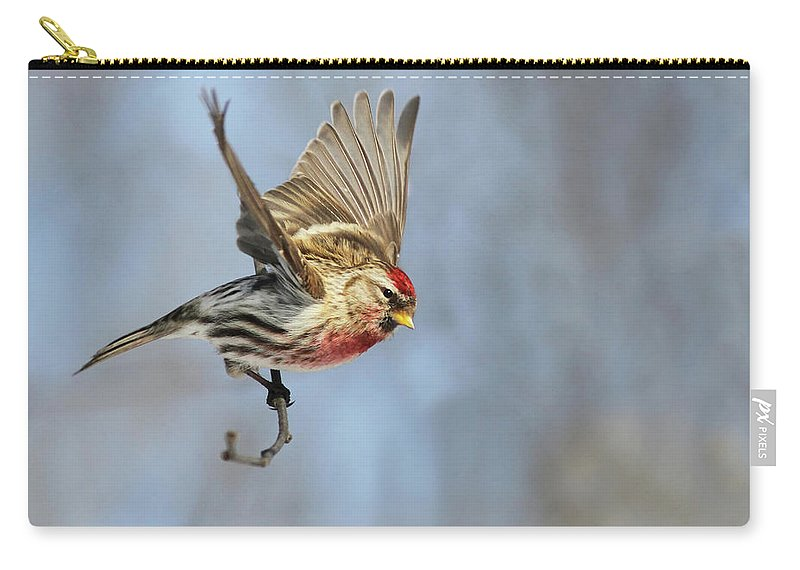 Common Redpoll In Flight Carry All Pouch For Sale By Mircea Costina Photography