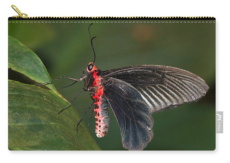 Butterfly Carry-all Pouch featuring the photograph Common Rose Butterfly by Louise Heusinkveld