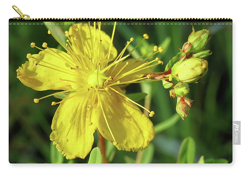 Flower Carry-all Pouch featuring the photograph Common St. John by Scott Kingery