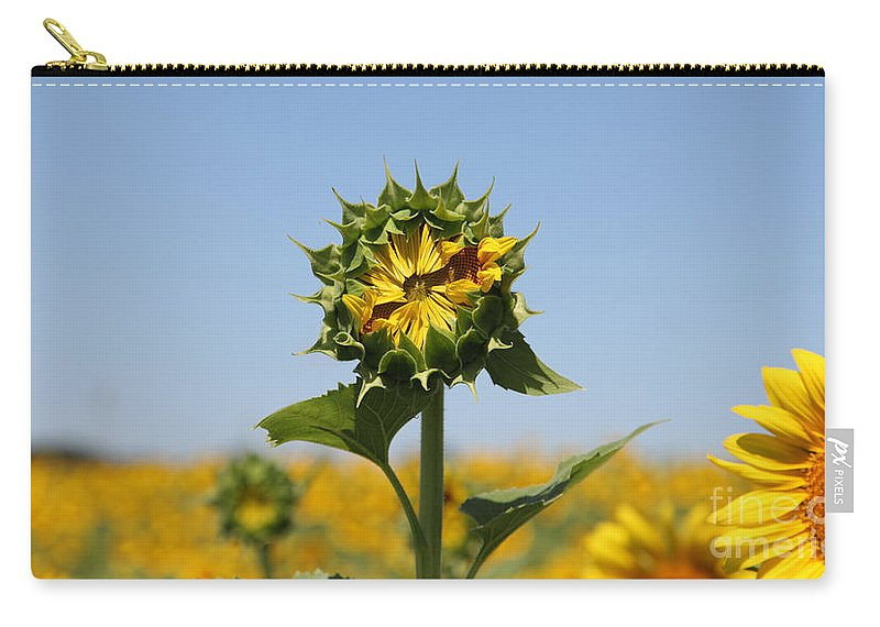 Sunflowers Carry-all Pouch featuring the photograph Competition by Amanda Barcon